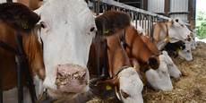 Ministerium Gibt Entwarnung Milch Nicht Mit Antibiotika