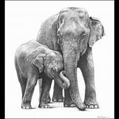 1000  Images About Elephant Sketch On Pinterest