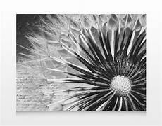 Keilrahmen Bilder Schwarz Weiß - leinwand bild bilder pusteblume schwarz wei 223 80x60 druck