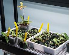 led lights for growing orchids our paphiopedilum seedling