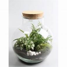 Terrarium Plantes Vertes 20 Cm H30 Schilliger