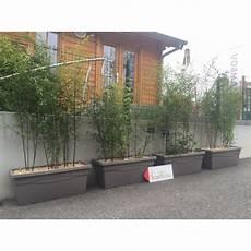 grande jardinière pour bambou planter bambou jardiniere pivoine etc