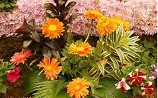 Flower Wallpaper by Widescreen Flower Garden Wallpapers Wallpapersafari