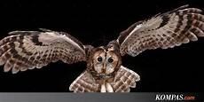 Gambar Tato Burung Hantu Di Tangan Simple Gambar Burung
