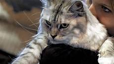 spa toulouse 171 c est la p 233 riode des chatons 187 ladepeche fr