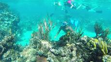 snorkeling in roat 225 n honduras december 2013 youtube
