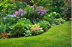 perennial plant information what is definition of perennial plant