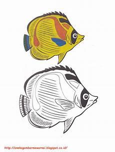 Gambar Mewarnai Ikan Kupu Kupu Untuk Anak Paud Dan Tk