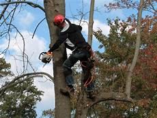 couper un arbre 12261 ai je le droit de couper les branches de l arbre du voisin qui d 233 passent sans avis