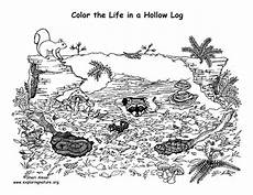 coloring pages ecosystem animals 16973 animals living in a hollow log coloring nature