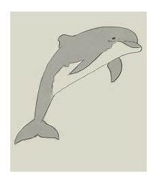 Malvorlagen Delphin Xl Delfin Zum Ausdrucken Deco Schult 252 Te Delfin Schult 252 Te