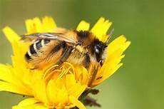 Biene Malvorlagen Xing Krafttiere Die Biene 187 Spirituelle Lebensberatung