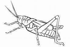 ausmalbilder kostenlos insekten ausmalbilder