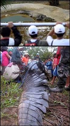 News Info Malaysia Buaya Terbesar Di Dunia 11 Gambar