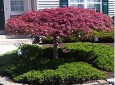 arbre décoratif extérieur 29450 d 233 coration avec un 233 rable japonais archzine fr