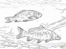 ausmalbilder fische karpfen batavusprorace