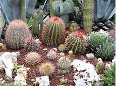 giardini piante grasse per esterno terriccio professionale per piante grasse da esterno