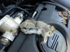 Marder Im Auto - marder im neh nicht garten sondern im auto garten und
