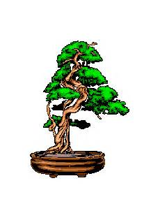 bonsai baum berlin bonsaiclub berlin e v
