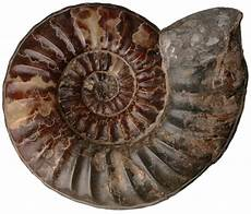 types of fossils fossils dk find out