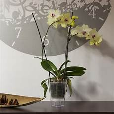 orchidea vaso trasparente portavaso vaso orchidea con fondo rialzato chiaro trasparente