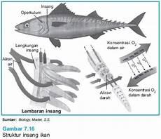 Pernafasan Pernafasan Pada Ikan