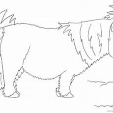 Einfache Malvorlage Pferd Pony Ausmalbilder Pferde Viele Malvorlagen Mit Pferden