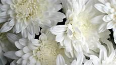 White Flowers Hd Images white flowers 4k hd desktop wallpaper for 4k ultra hd tv