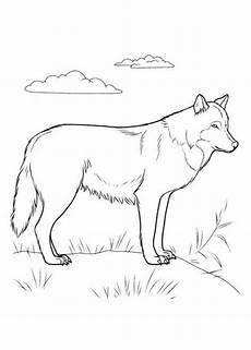 wolf 3 ausmalbilder ausmalen und wolf