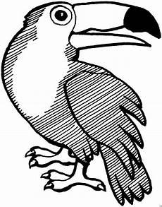 Malvorlage Indianer Kopf Tukan Dreht Kopf Ausmalbild Malvorlage Tiere
