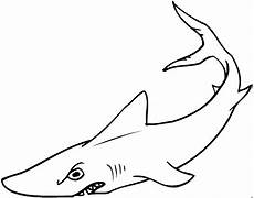 grimmiger hai 2 ausmalbild malvorlage tiere