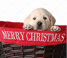 merry christmas puppies merry christmas puppy stock