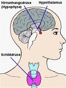 schilddrüse symptome test tsh 220 bersicht