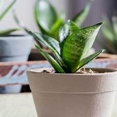 luftreinigende pflanzen fürs schlafzimmer luftreinigende pflanzen f 252 rs schlafzimmer lagerhaus