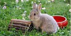sind kaninchen nicht s 252 ss cogeno