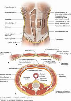abdominal diagram human anatomy abdomen stomach 2019 02 12