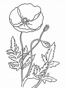 poppy coloring pages pdf jpg free premium templates