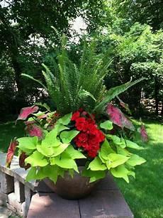 le pour plante 18550 composition jardini 232 re 233 t 233 de plantes vertes et fleurs rouges pour pimenter le d 233 cor garden