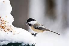 einheimische vögel im winter v 246 gel im winter f 252 ttern gartentechnik de