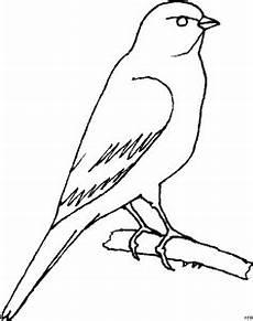 Malvorlage Vogel Auf Ast Vogel Ast Ausmalbild Malvorlage Comics