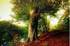 Beautiful Tree Images