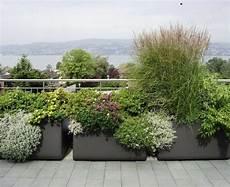 kuebelpflanzen fuer terrasse int 233 grer avec succ 232 s la grande jardini 232 re dans le jardin