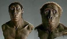 die evolution des menschen geschichte