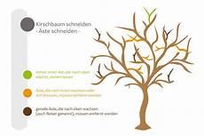 kirschbaum schneiden zeitpunkt pr 228 ferenz kirschbaum radikal schneiden tz43