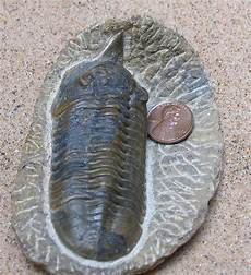 paleozoic fossil fossil