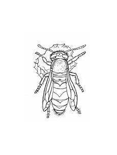 wasp coloring page free printable coloring pages