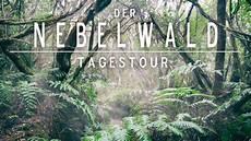 Malvorlagen Urwald Europa Tour Der Nebelwald Auf Teneriffa Urwald Erlebnis In