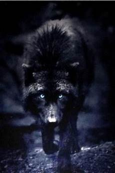 black and white wolf wallpaper iphone wolf wallpaper iphone gallery