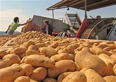 vom kartoffel stecken bis zur ernte