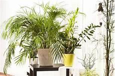 Frage Antwort Nr 519 Sind Pflanzen Im Schlafzimmer